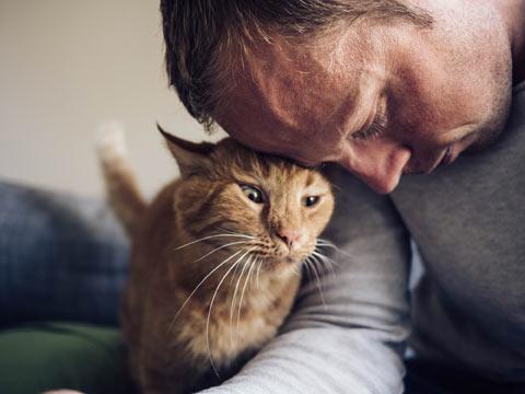 แมว ช่วยบำบัดโรค